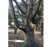 Berkeley tree Photographic Print