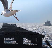 Pier to Alcatraz by David Denny