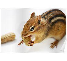 Found a peanut... Poster