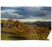 """Afternoon Light """"Warrigal"""" Poster"""