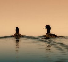 Serene birds by Paul Wratislaw