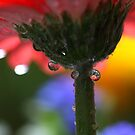 Color droplets by PhotoTamara