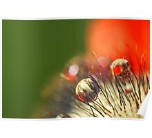 Poppy Drop Abstract Poster