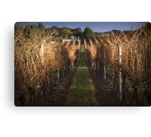 Vineyard at Last Light Canvas Print