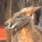 Red kangaroo by mechelle142