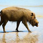 Bearded wild boar on beach by mechelle142