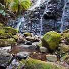 Upper Falls - Mt Wilson by Tim Beasley