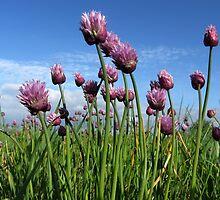 Wild Pink Flowers by ienemien