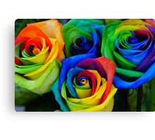 Beautiful rainbow roses  Canvas Print