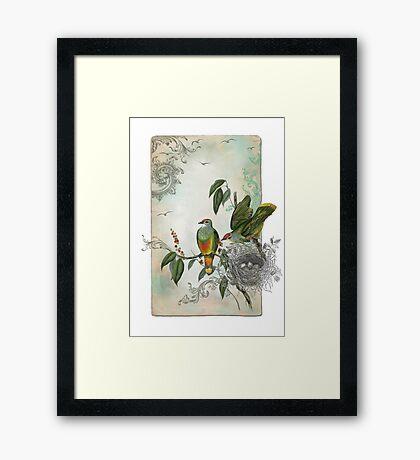 Nesting Birds Framed Print