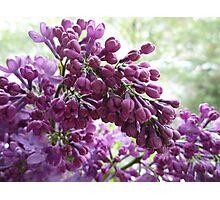 Ice Purple Photographic Print