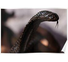 The Snake charmer's snake. Poster