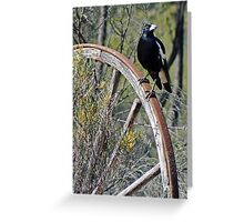 All Australian Magpie Greeting Card