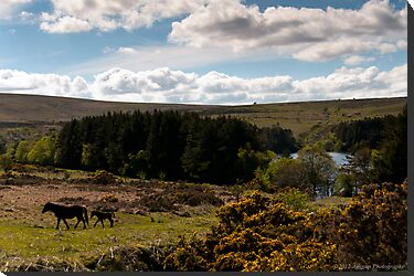 Venford Reservoir by Aggpup