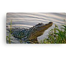HDR Alligator Canvas Print