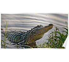 HDR Alligator Poster
