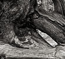 Stump by Jeffrey  Sinnock