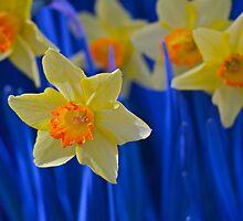 Daffodils by ishotit4u
