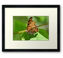 I Have a Question... Framed Print