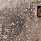 Rhesus macaques. by Stephen Brown