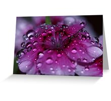 Pretty Dianthus  Greeting Card