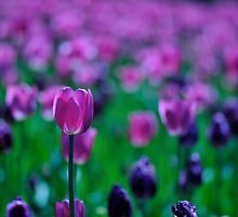 Pink and Purple by Vee Robillard