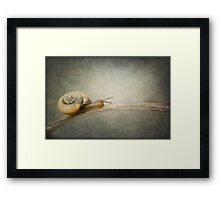The Adventurer. Framed Print