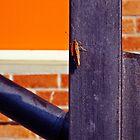 Orange by Patricia Gavra