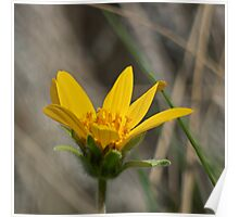 Spring Wildflower Poster