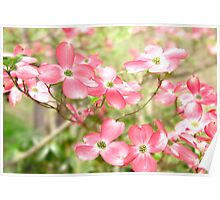 Pink Spring Flowers In A Blur Of Greenery Poster