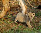 Minature of mom by Explorations Africa Dan MacKenzie