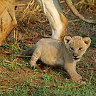 Minature of mom by Explorations Africa Dan MacKenzie