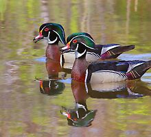 Twin Beaks by Jim Cumming