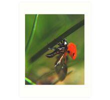 Ladybird just before flight Art Print