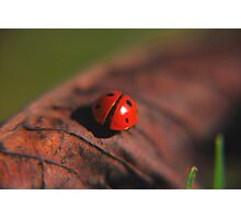 Ladybird on his travels Photographic Print