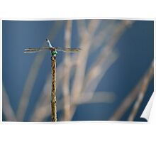 Green Eyes Dragonfly Poster