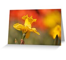Sunshine On Daffodil Greeting Card