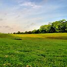 God's Green Grass by aprilann
