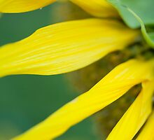 Sunflowers make me happy by MissMA