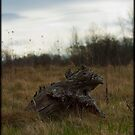 Turtle by vince dwyer