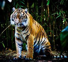 Tiger by LieselMc