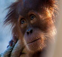 Orangutan  by LieselMc