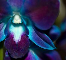 Multi-Hued Orchid by Sandra Chung