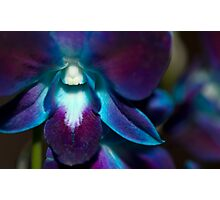 Multi-Hued Orchid Photographic Print