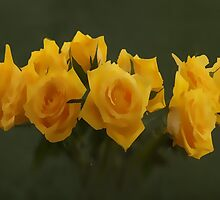 one and eight yellow roses by OlaG