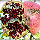 Pomegranate #2 by Julie Sleeman