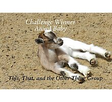 Challenge Winner - Aww Baby Photographic Print