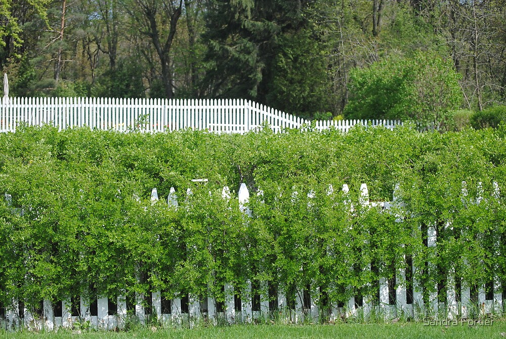 Fence Me In by Sandra Fortier