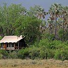 Tubu Tree 2 by Explorations Africa Dan MacKenzie