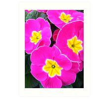 Pink Primrose Art Print